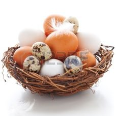 11962996-different-types-of-eggs-in-a-nest-with-feathers-on-a-white-background