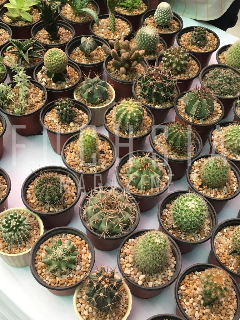Cacti, Karachi Farmer's Market, Organic produce in Karachi