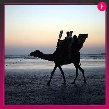 camel ride, seaview